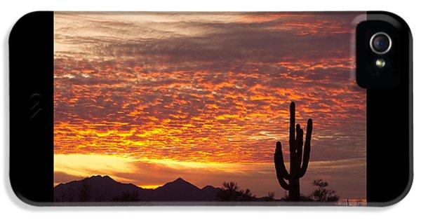 Arizona November Sunrise With Saguaro   IPhone 5 Case