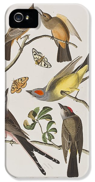 Arkansaw Flycatcher Swallow-tailed Flycatcher Says Flycatcher IPhone 5 Case