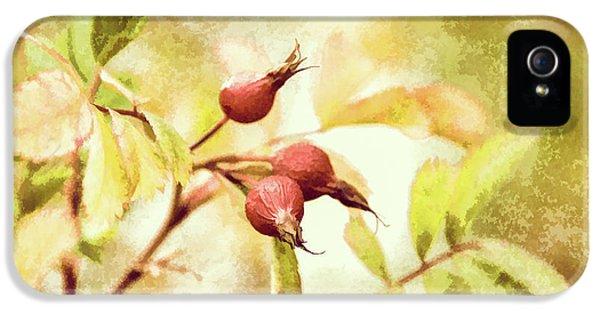 Artistic Rose Hips IPhone 5 Case