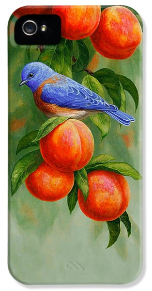 Bluebird And Peaches Greeting Card 2 IPhone 5 Case by Crista Forest