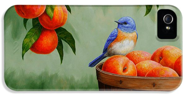Bluebird And Peaches Greeting Card 3 IPhone 5 Case by Crista Forest