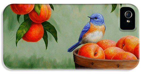 Bluebird And Peaches Greeting Card 3 IPhone 5 Case