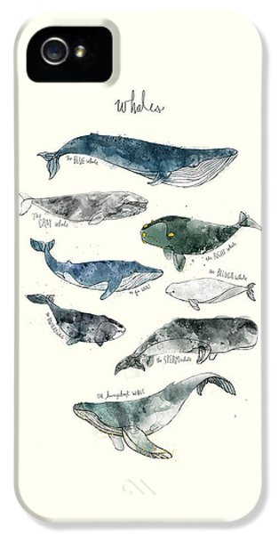 Whales IPhone 5 Case by Amy Hamilton