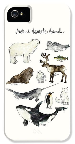 Arctic And Antarctic Animals IPhone 5 Case by Amy Hamilton
