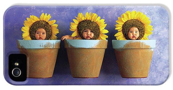 Sunflower Pots IPhone 5 Case by Anne Geddes