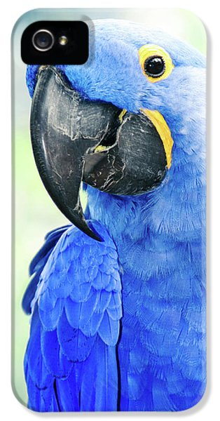 Macaw iPhone 5 Case - Beauty Is An Enchanted Soul by Sharon Mau