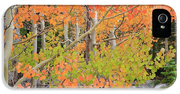 IPhone 5 Case featuring the photograph Aspen Stoplight by David Chandler