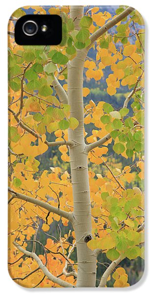 IPhone 5 Case featuring the photograph Aspen Watching You by David Chandler