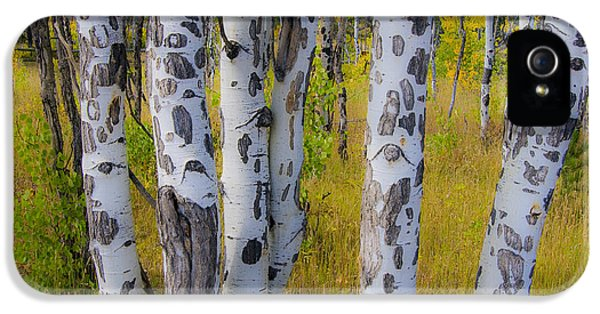 IPhone 5 Case featuring the photograph Aspens by Gary Lengyel