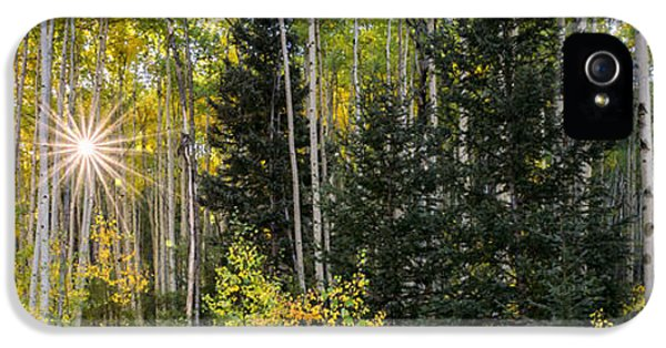 Aspens In Autumn 5 Panorama - Santa Fe National Forest New Mexico IPhone 5 Case