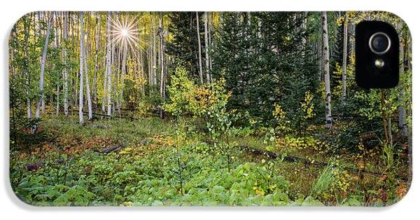 Aspens In Autumn 5 - Santa Fe National Forest New Mexico IPhone 5 Case