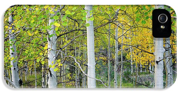 Aspens In Autumn 6 - Santa Fe National Forest New Mexico IPhone 5 Case