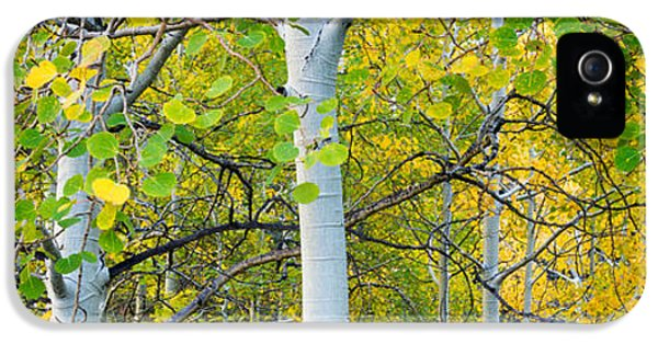 Aspens In Autumn Panorama 2 - Santa Fe National Forest IPhone 5 Case