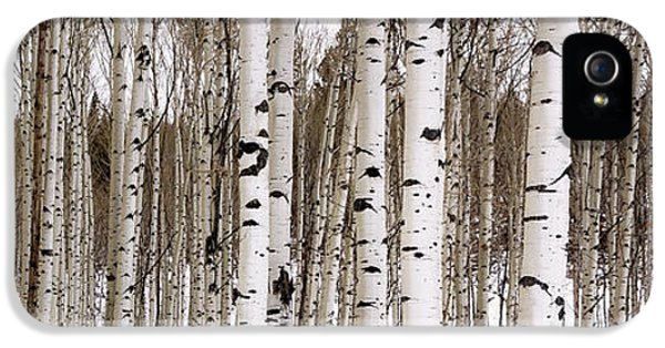 Aspens In Winter Panorama - Colorado IPhone 5 Case by Brian Harig