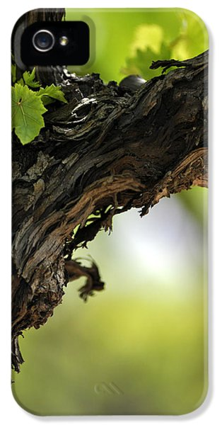 IPhone 5 Case featuring the photograph At Lachish Vineyard by Dubi Roman