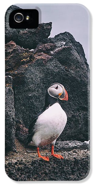 Puffin iPhone 5 Case - Atlantic Puffin by Happy Home Artistry