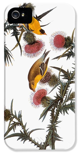 Audubon: Goldfinch IPhone 5 Case