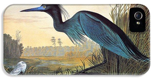 Audubon: Little Blue Heron IPhone 5 / 5s Case by Granger