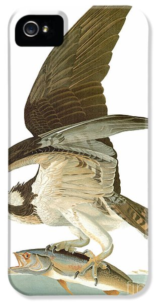 Osprey iPhone 5 Case - Audubon: Osprey by Granger