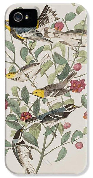Audubons Warbler Hermit Warbler Black-throated Gray Warbler IPhone 5 Case