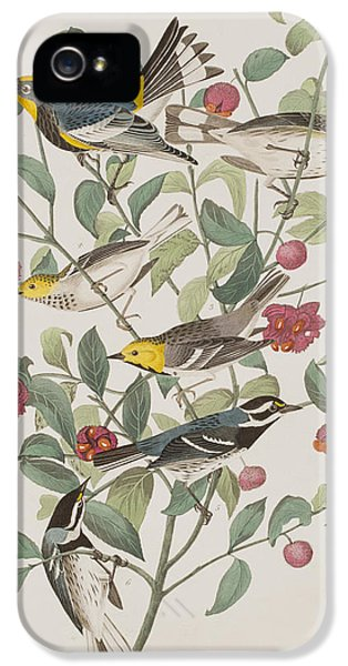 Audubons Warbler Hermit Warbler Black-throated Gray Warbler IPhone 5 Case by John James Audubon