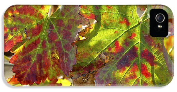 IPhone 5 Case featuring the photograph Autumn At Lachish Vineyards 2 by Dubi Roman