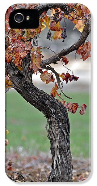 IPhone 5 Case featuring the photograph Autumn At Lachish Vineyards 3 by Dubi Roman
