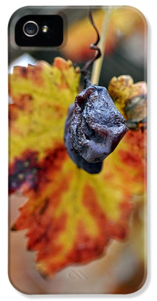 IPhone 5 Case featuring the photograph Autumn At Lachish Vineyards 5 by Dubi Roman