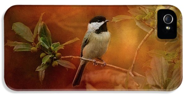 Autumn Day Chickadee Bird Art IPhone 5 / 5s Case by Jai Johnson