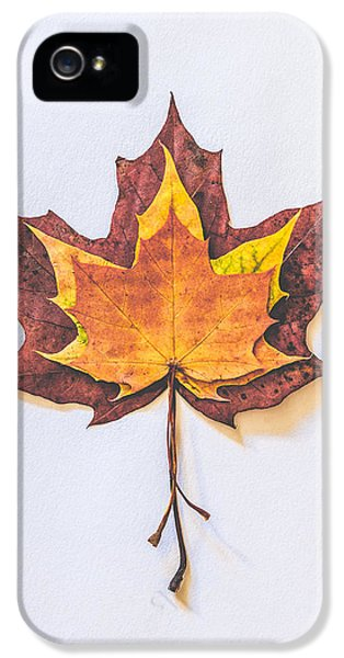 Autumn Fire IPhone 5 Case by Kate Morton