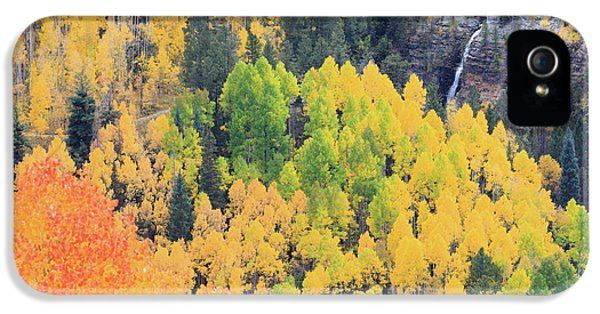 Autumn Glory IPhone 5 Case by David Chandler