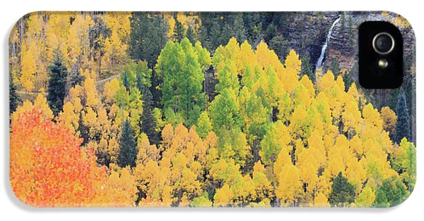 IPhone 5 Case featuring the photograph Autumn Glory by David Chandler