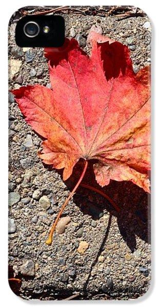 Orange iPhone 5 Case - Autumn Is Here by Blenda Studio