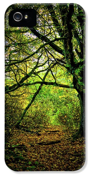 IPhone 5 Case featuring the photograph Autumn Light by David Patterson