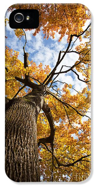 Autumn Tree IPhone 5 Case by Nailia Schwarz