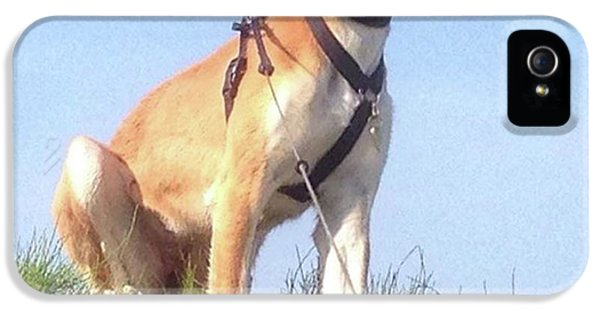 Ava-grace, Princess Of Arabia  #saluki IPhone 5 Case