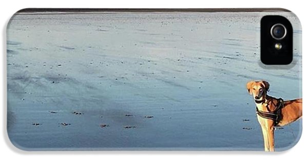 Ava's Last Walk On Brancaster Beach IPhone 5 Case by John Edwards