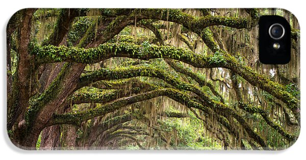 Avenue Of Oaks - Charleston Sc Plantation Live Oak Trees Forest Landscape IPhone 5 Case by Dave Allen