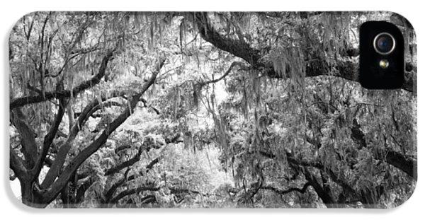 Avenue Of Oaks Charleston South Carolina IPhone 5 Case