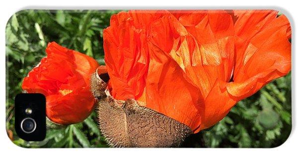 iPhone 5 Case - Awakening Poppy by Orphelia Aristal