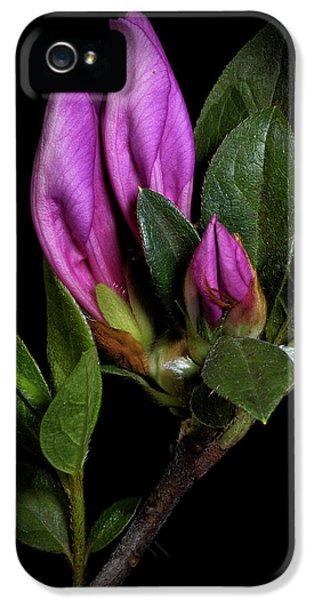 Azalea Buds IPhone 5 Case by Richard Rizzo
