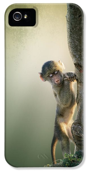 Baby Baboon In Tree IPhone 5 Case by Johan Swanepoel