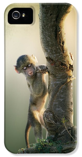 Baby Baboon In Tree IPhone 5 Case