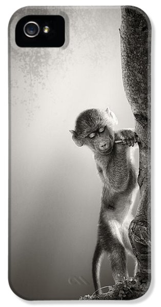 Baby Baboon IPhone 5 Case by Johan Swanepoel