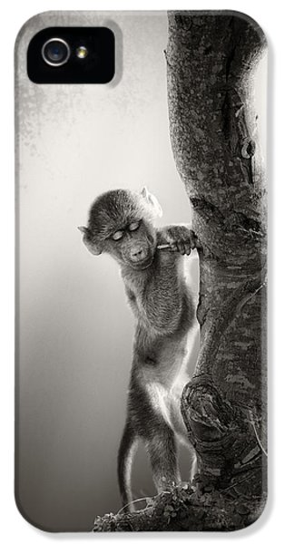Baby Baboon IPhone 5 Case