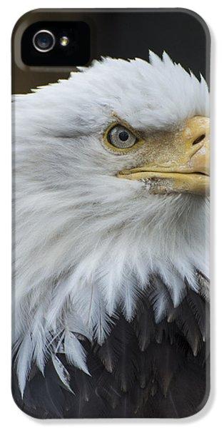 Bald Eagle Portrait IPhone 5 Case by Gary Lengyel