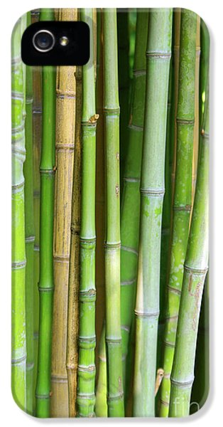 Bamboo Background IPhone 5 Case by Carlos Caetano