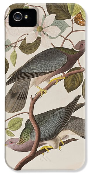 Band-tailed Pigeon  IPhone 5 / 5s Case by John James Audubon