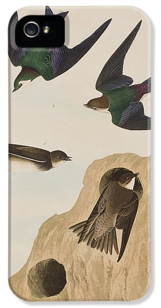 Bank Swallows IPhone 5 Case by John James Audubon