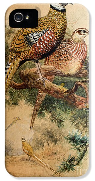 Bar-tailed Pheasant IPhone 5 Case by Joseph Wolf